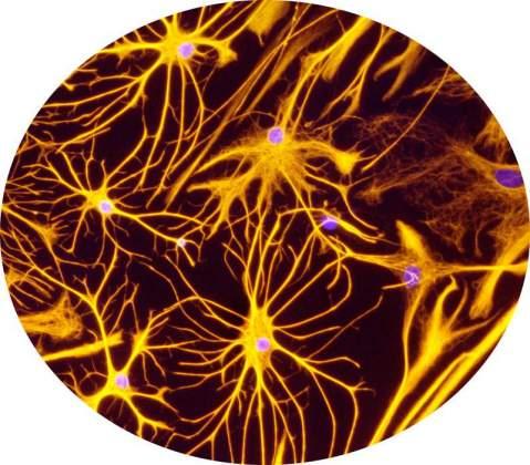 BBB: Astrocytes | Itzik Cooper and Dr. Keti Cohen-Kashi Malina, Neurobiology