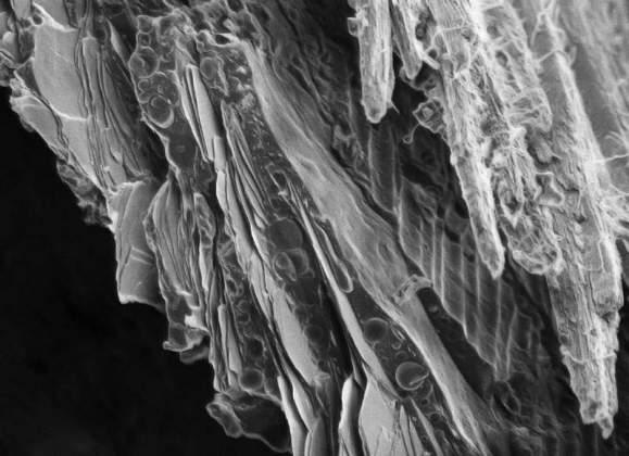 The Koi Fish | Dvir Gur, Structural Biology