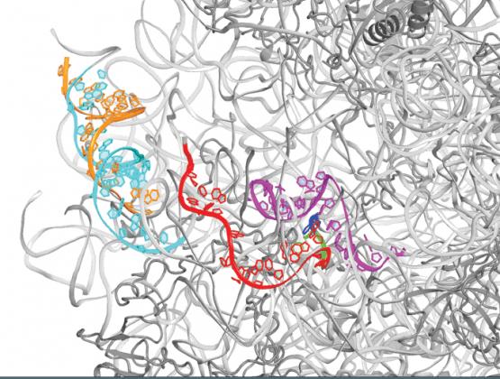 NOVRIB\ Novel insights into multi-drug resistance to antibiotics and the primordial ribosome