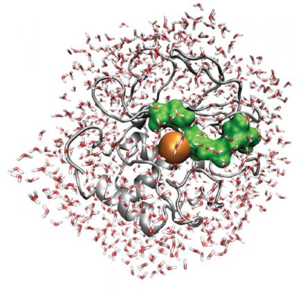 THZCALORIMETRY\ Time Resolved THz Calorimetry explores Molecular Recognition Processes