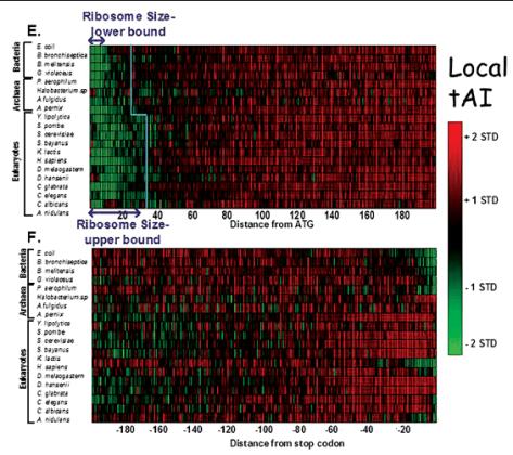 tRNAProlif\ Control of translation efficiency in proliferating and differentiating mammalian cells