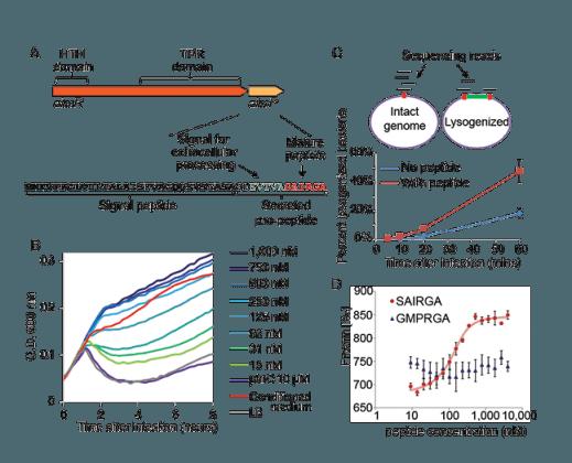 DrugSense\ Ribo-regulators that sense trace antibiotics