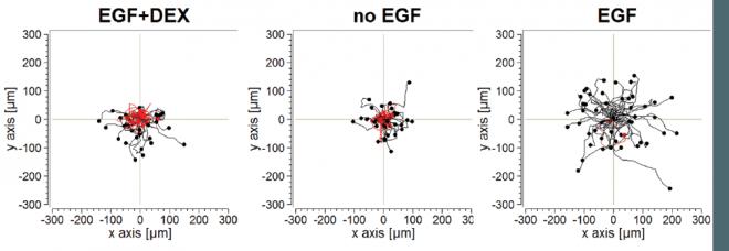 oncRobust\ Unravelling oncogenic defects in feedback control of receptor tyrosine kinases