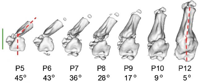 kiNESIS\ NovEl Strategies for treatIng tendon-to-bone injurieS - kiNESIS