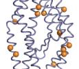 AbDesign\ Computational design of novel protein function in antibodies